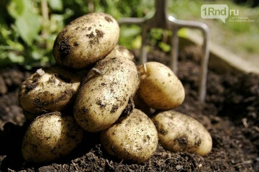 Выбираем картофель для варки, жарки и зимнего хранения, фото-2