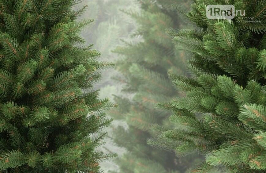 Выбираем новогоднюю елку: на что обратить внимание, фото-3, https://ukranews.com