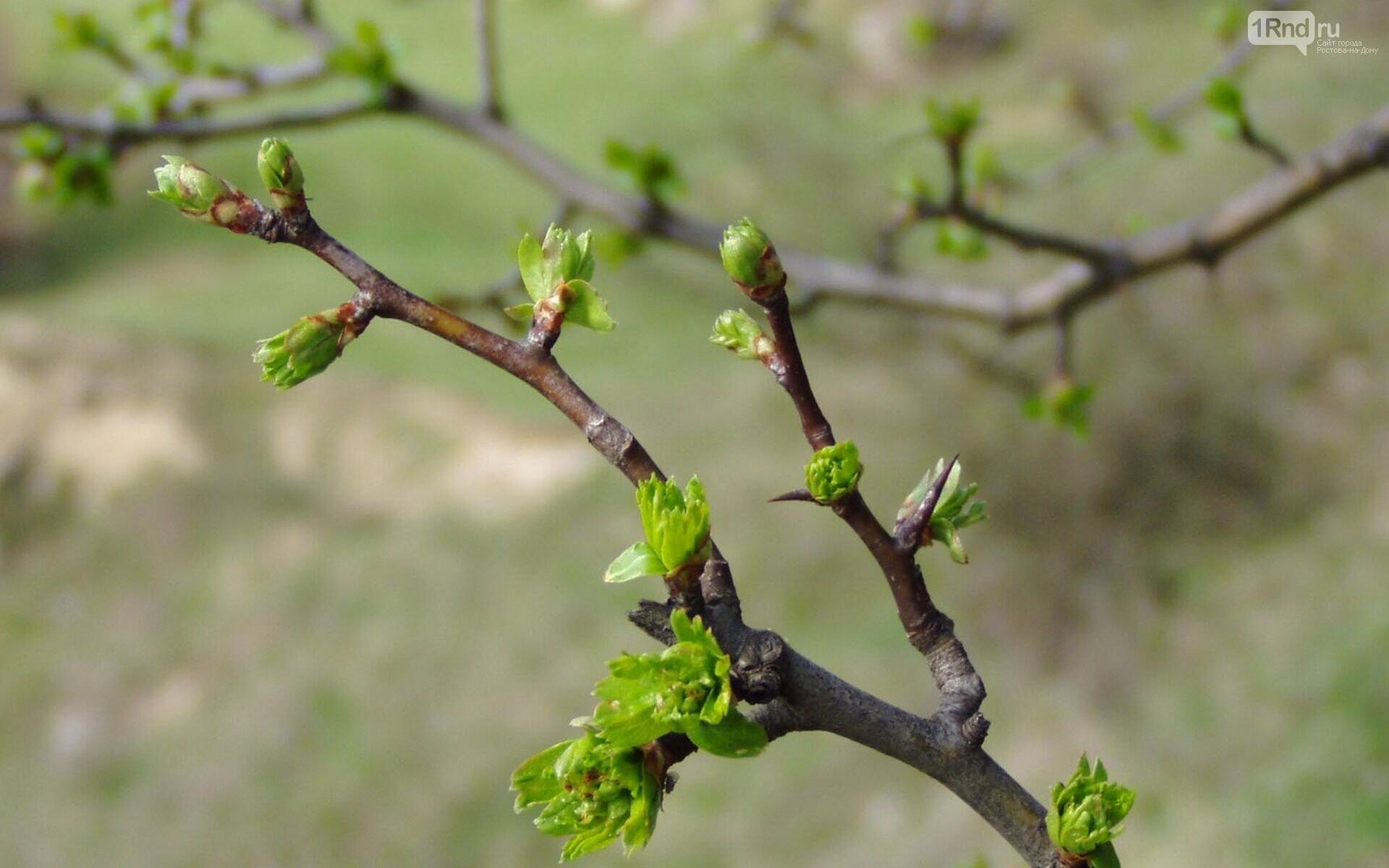 Как обновиться весной, фото-1
