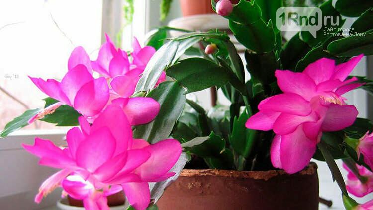 здоровый комнатный цветок