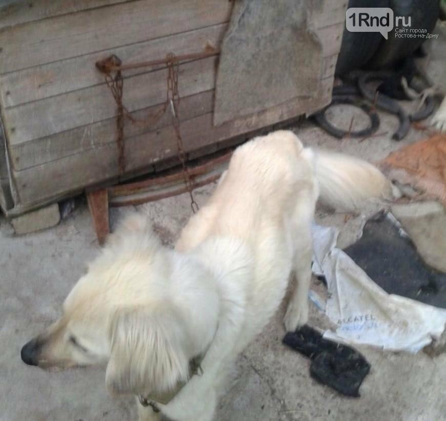 Концлагерь для собак найден на даче под Ростовом, фото-2