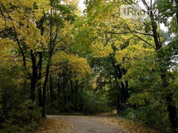 Год экологии по-ростовски: какие памятники природы пойдут под снос, фото-7
