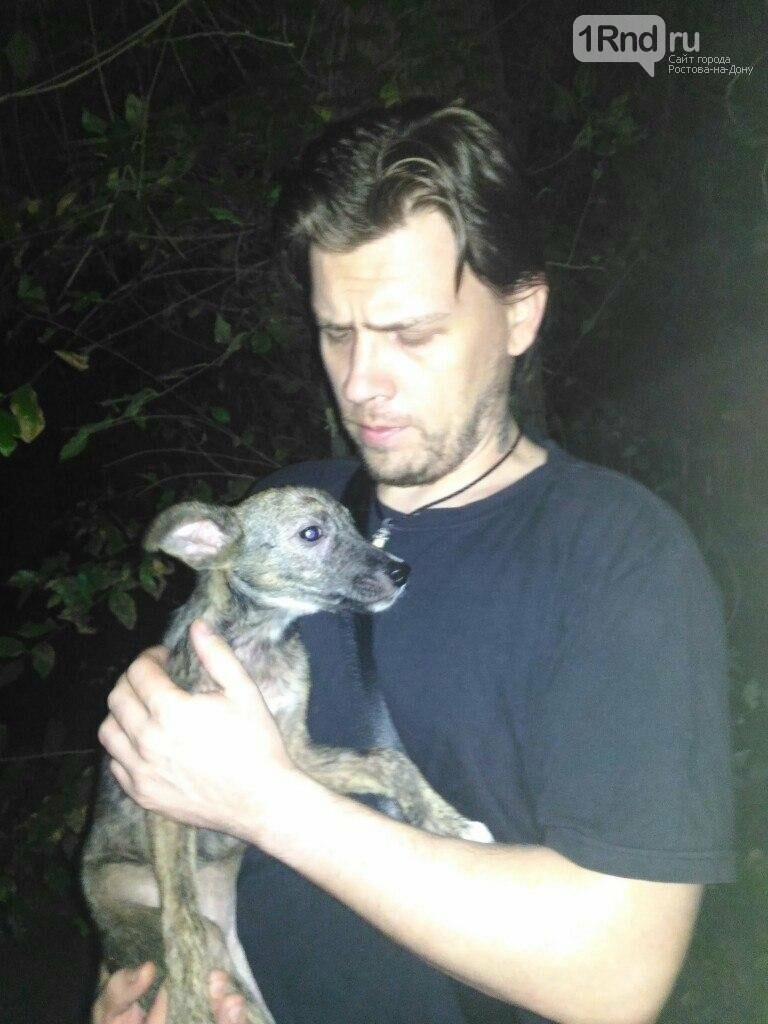 Ростовчанин отбил собаку у живодеров, пытавшихся пустить ее на шашлык, фото-1