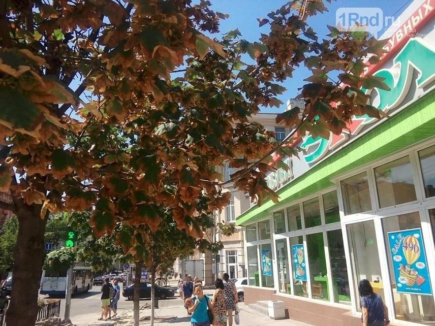 Правило тени: как Ростов-на-Дону переживает экстремальную жару, фото-9