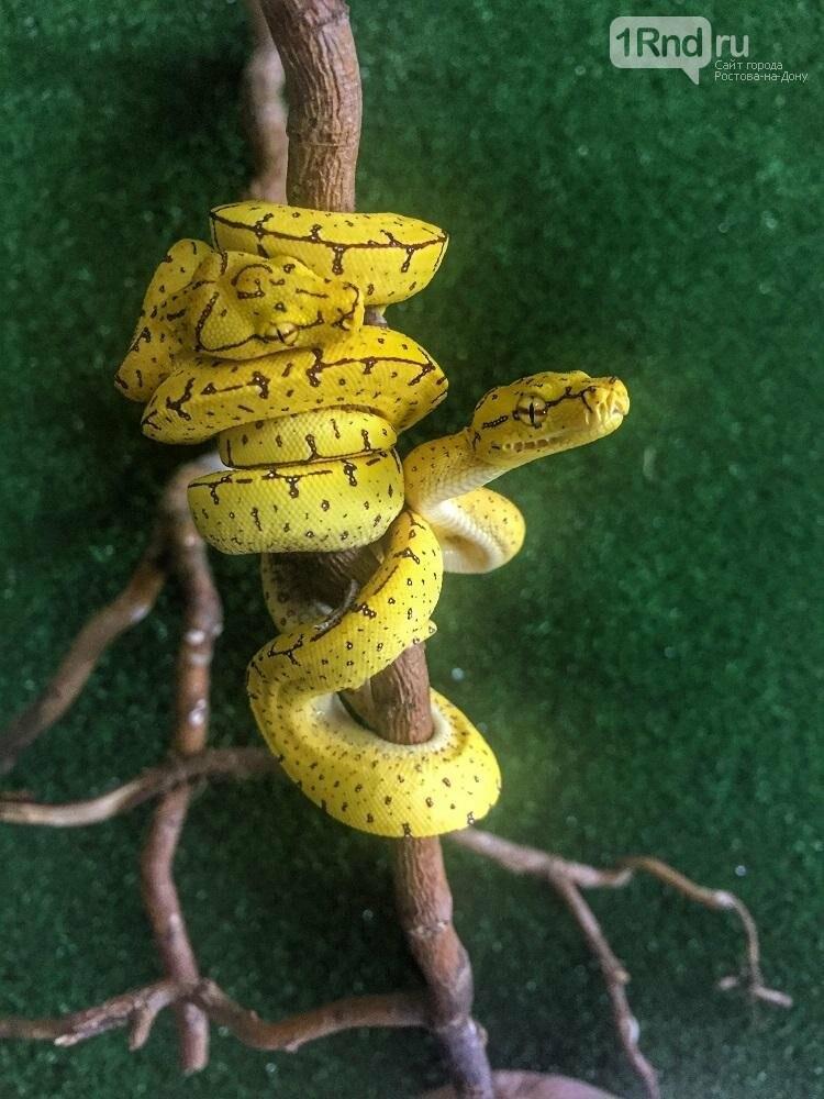 В зоопарке Ростова родились удавы, питоны и ящерицы, фото-1, http://rostov-gorod.ru