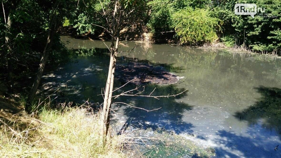 Минприроды: в Ростове обнаружено более 60 мест загрязнения реки Темерник, фото-9, Александра Савичева