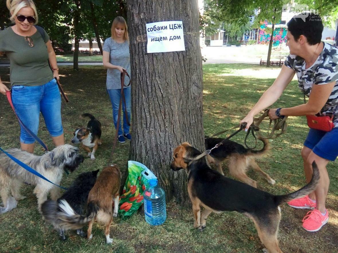 День бездомных животных отметили в Ростове-на-Дону, фото-7, Фото: Анна Дунаева