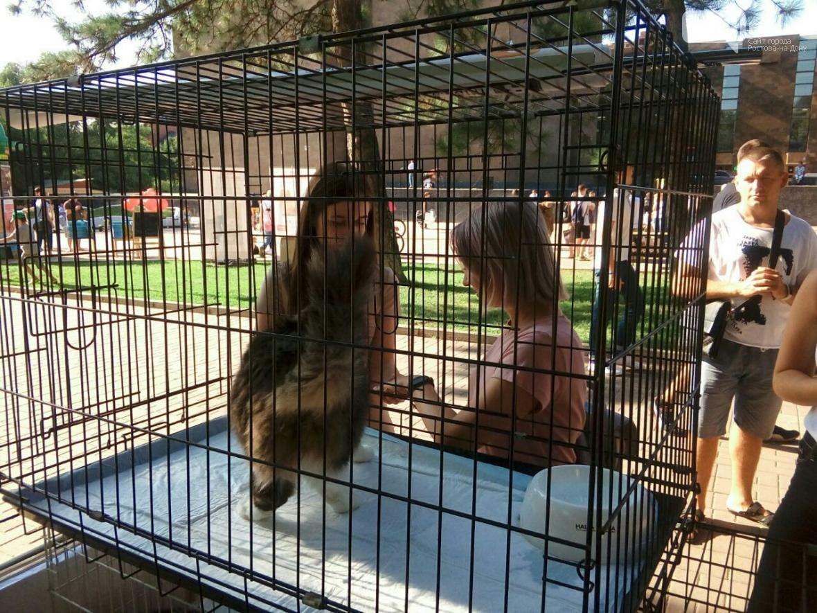 День бездомных животных отметили в Ростове-на-Дону, фото-5, Фото: Анна Дунаева