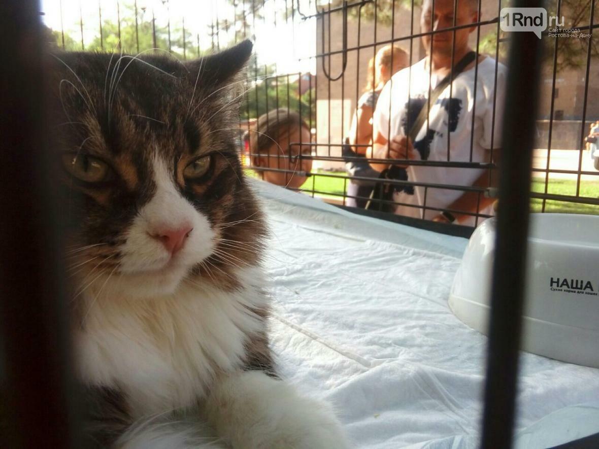 День бездомных животных отметили в Ростове-на-Дону, фото-1, Фото: Анна Дунаева