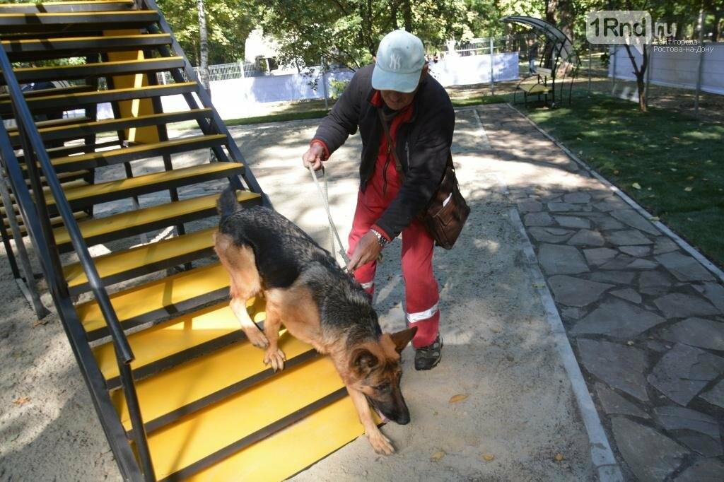 Во Всемирный день защиты животных в Ростове открылась спецплощадка для собак, фото-3, Фото: администрация Ростова-на-Дону