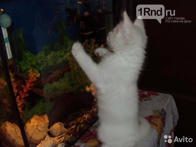 «Волшебного» белого кота реализует гражданин Новочеркасска за2,5 млн руб