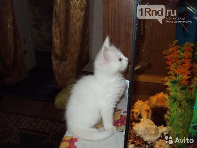НаДону «волшебного» кота выставили на реализацию за2,5 млн руб.