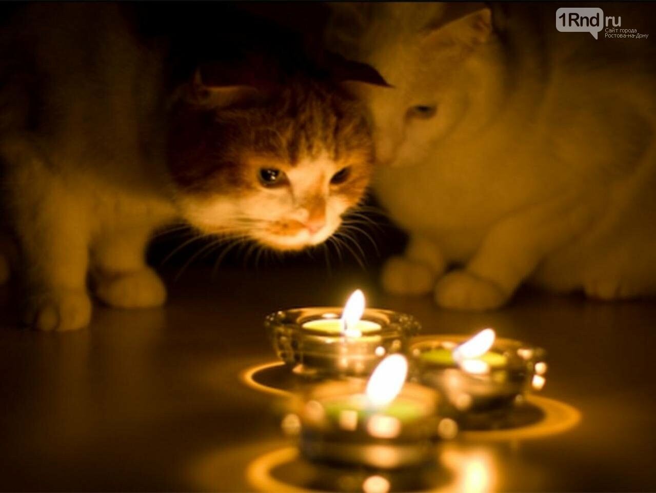 Рождественский сочельник: пять простых способов узнать свое будущее, фото-1, Фото: http://dniprograd.org