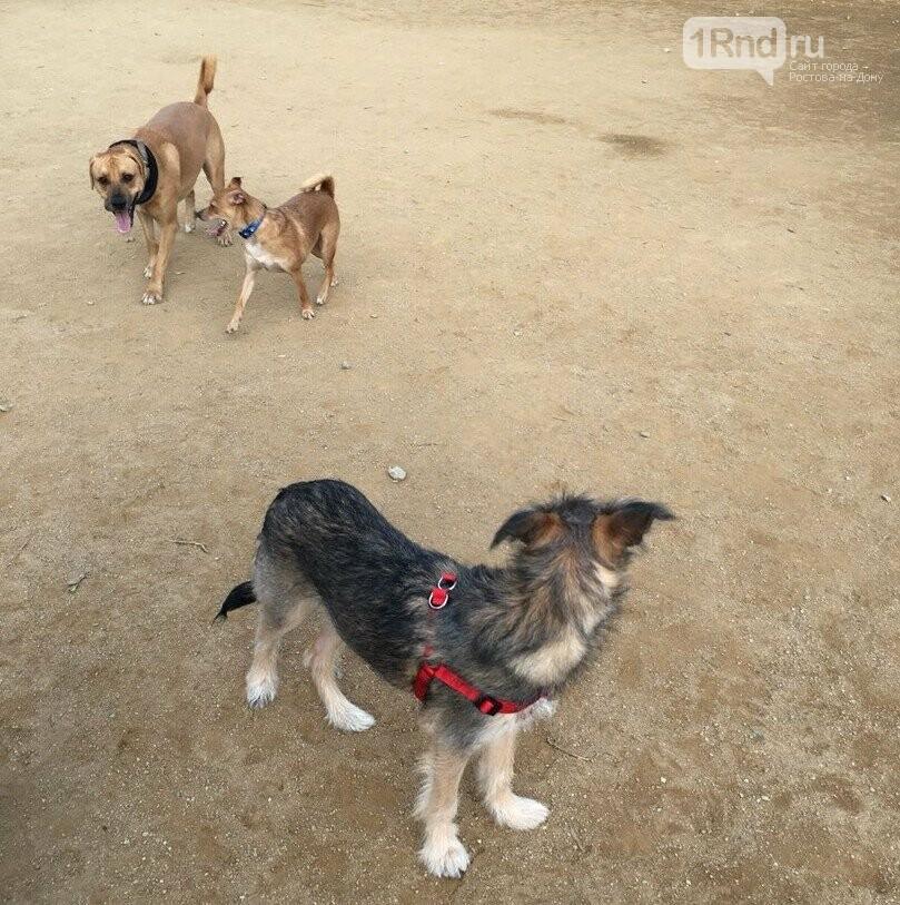 Ростовский бездомный пёс Родион отправился на ПМЖ в Испанию, фото-5