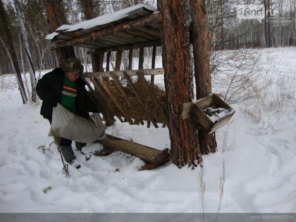 В Ростовской области для диких зверей организовали «большой обед», фото-3