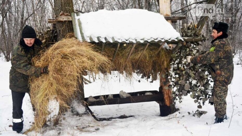 В Ростовской области для диких зверей организовали «большой обед», фото-2