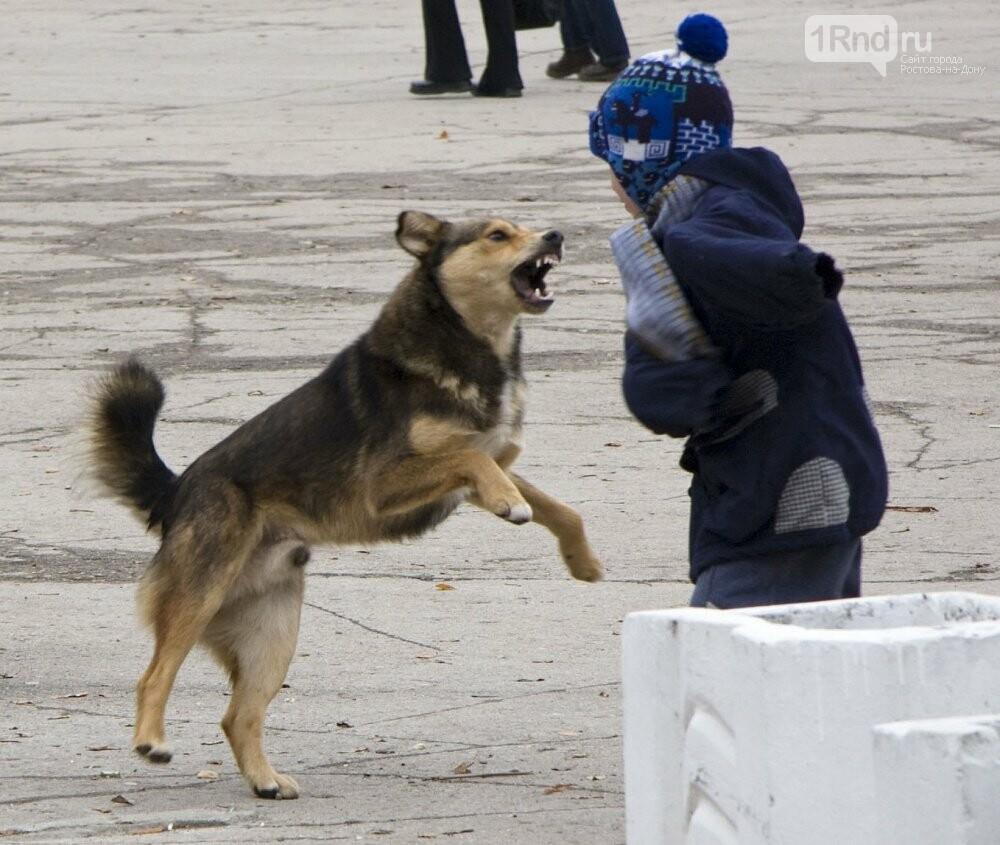 Как себя вести при столкновении с бродячими собаками - советы специалистов, фото-2