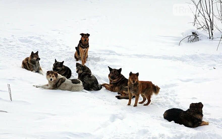 Как себя вести при столкновении с бродячими собаками - советы специалистов, фото-1
