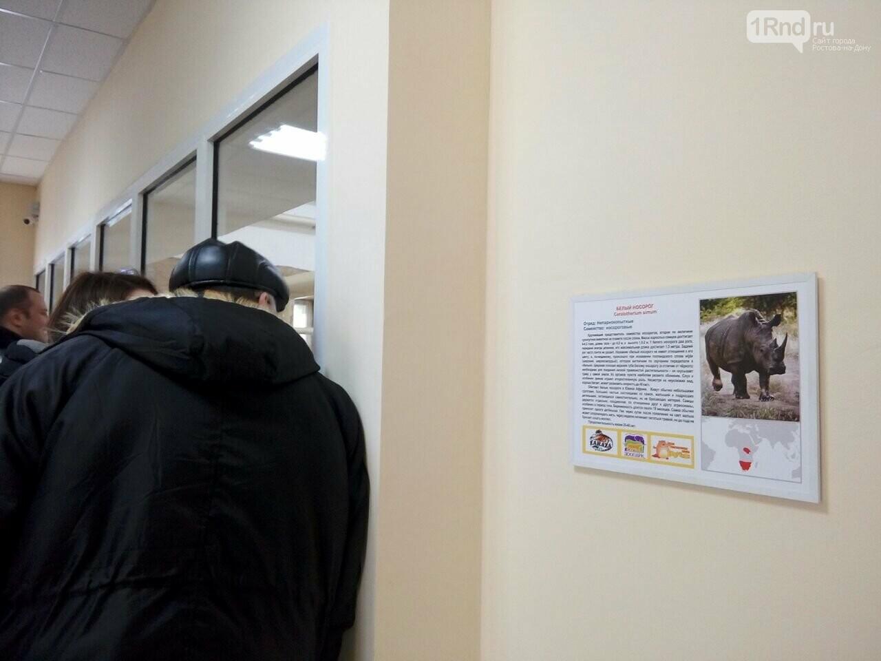 В ростовском зоопарке горожанам впервые показали носорога из Израиля, фото-4