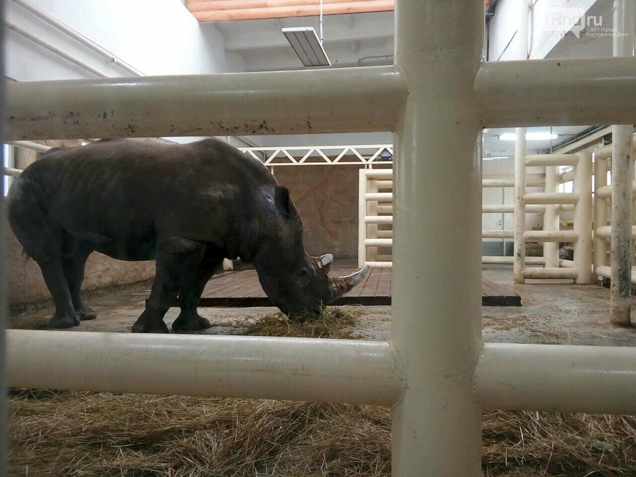 В ростовском зоопарке горожанам впервые показали носорога из Израиля, фото-7