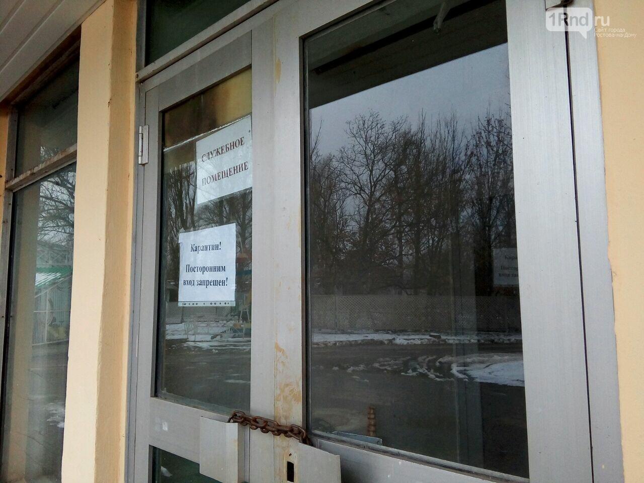 Изъятым под Ростовом контрабандным обезьянам грозит смерть, фото-7