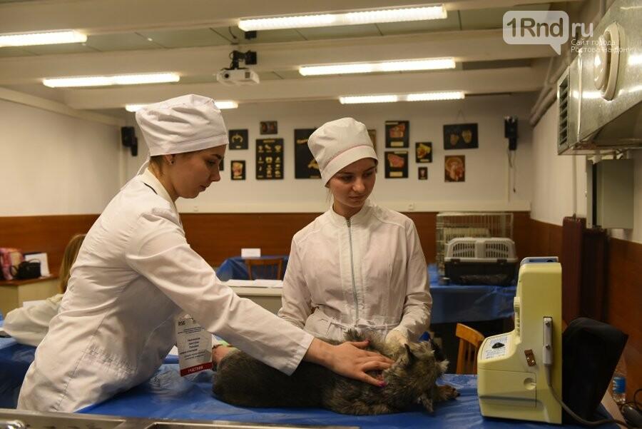 Вузовский чемпионат по стандартам WorldSkills Russia прошёл в Ростове, фото-2