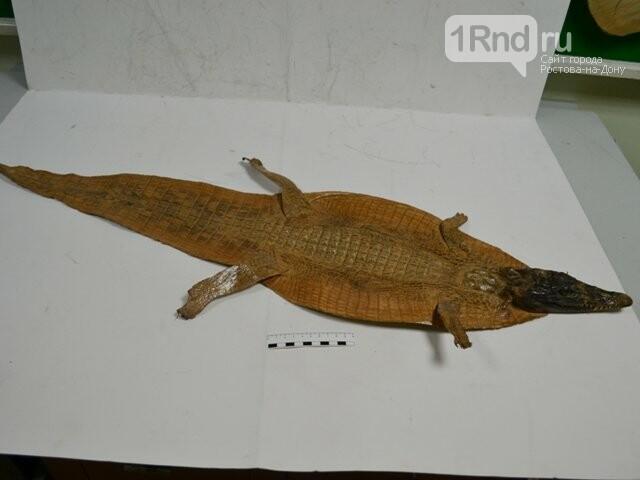 В Платове шкуры крокодилов не прошли таможенный контроль , фото-1