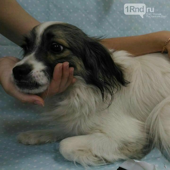 Собаки, которых отдали из ЦБЖ предположительно с нарушениями