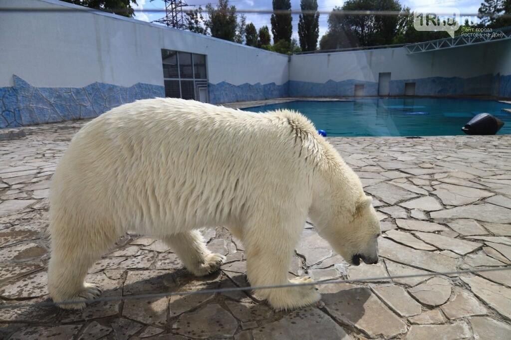 В зоопарке Ростова торжественно открыли обновленный вольер для белых медведей, фото-3
