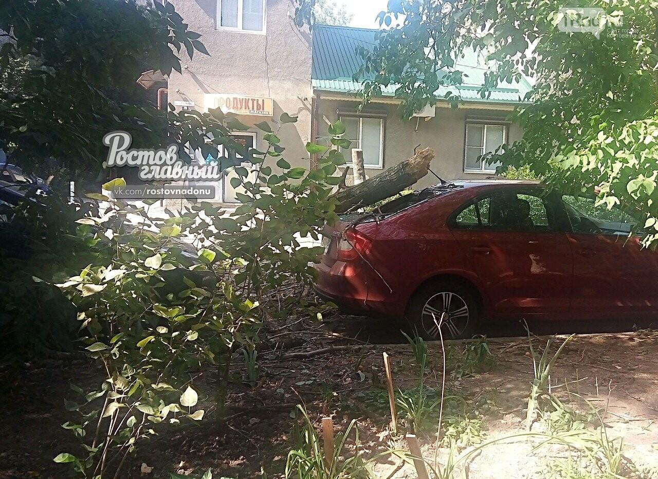 В центре Ростова дерево упало на припаркованную иномарку, фото-1
