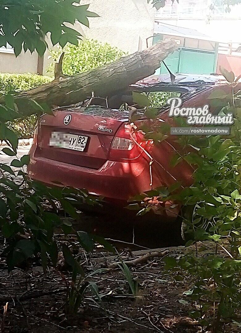 В центре Ростова дерево упало на припаркованную иномарку, фото-3