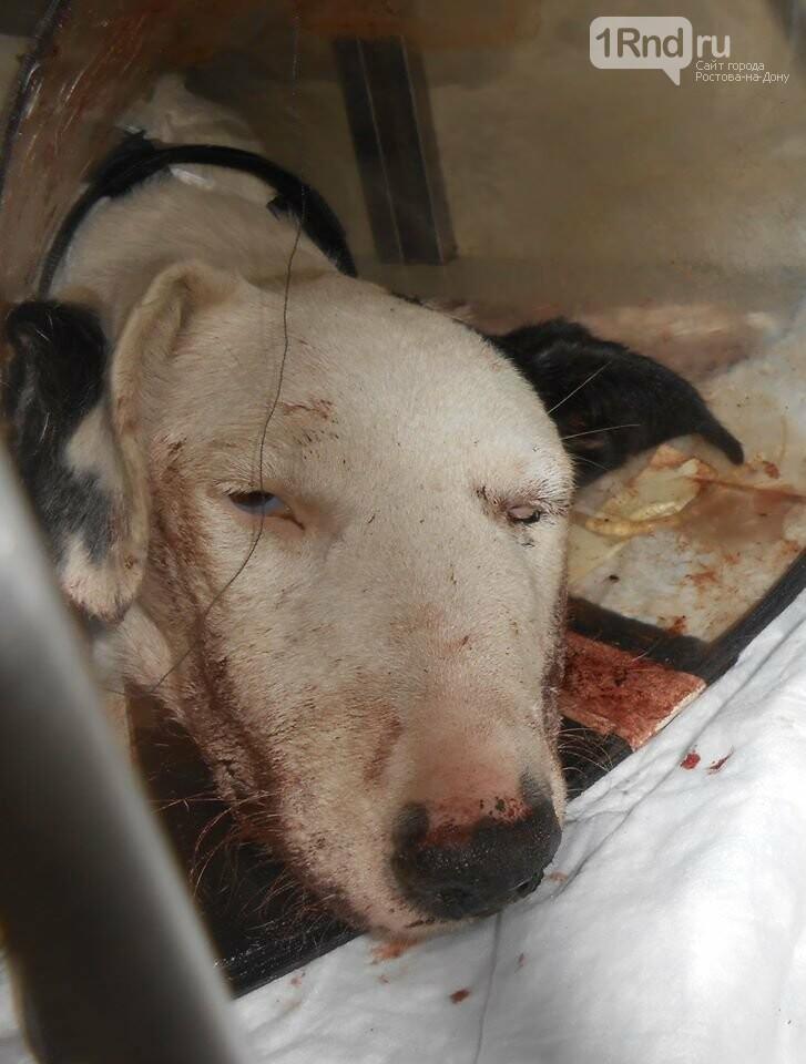 В Ростове живодер до полусмерти избил собаку битой, фото-1