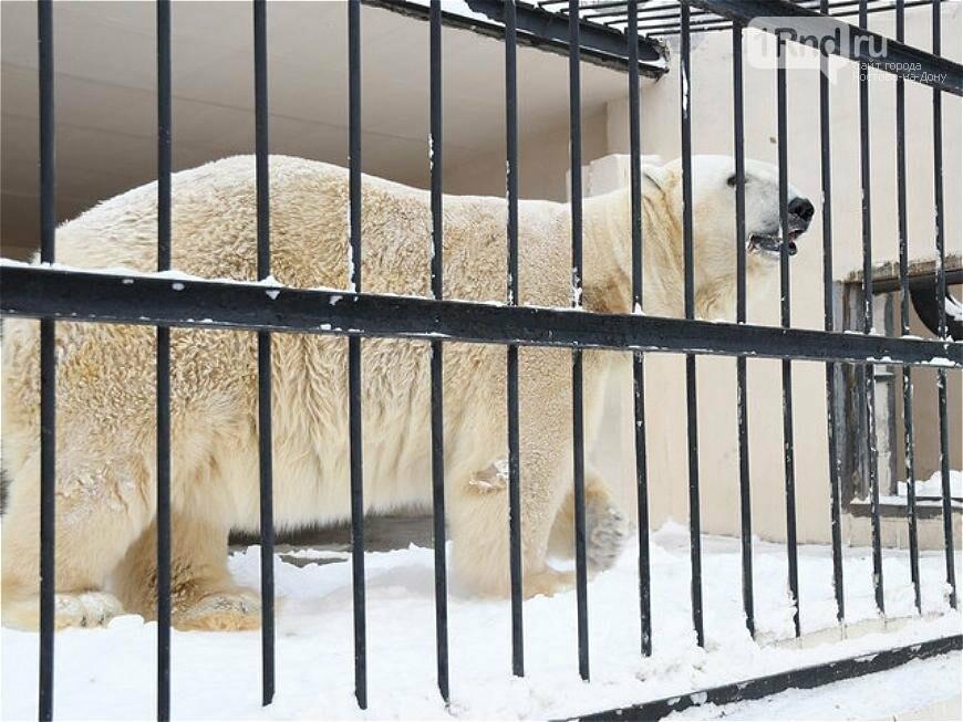 Белого медведя из зоопарка Ростова отправили к невесте в Казань, фото-4
