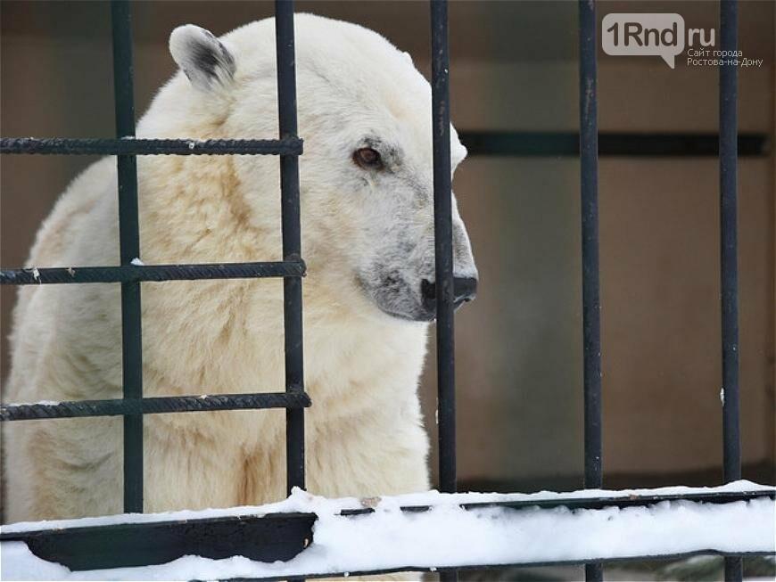 Белого медведя из зоопарка Ростова отправили к невесте в Казань, фото-3
