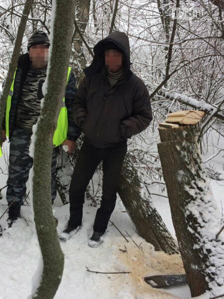 Житель Ростовской области может попасть в тюрьму из-за срубленного ясеня, фото-1