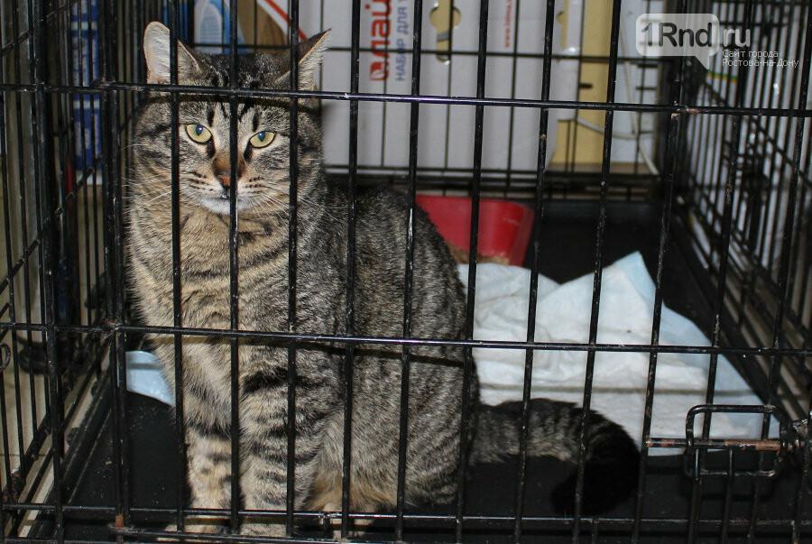 Врачи ветлечебницы ищут новых хозяев для оставленного у них кота, фото-2