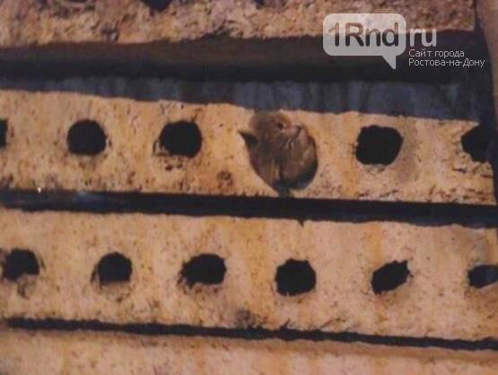 Ростовчане спасли застрявшего в бетонной плите кота, фото-1