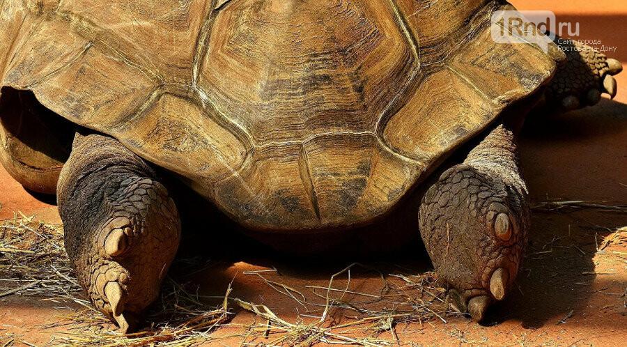 Ростовскому зоопарку грозит прокурорская проверка, фото-2