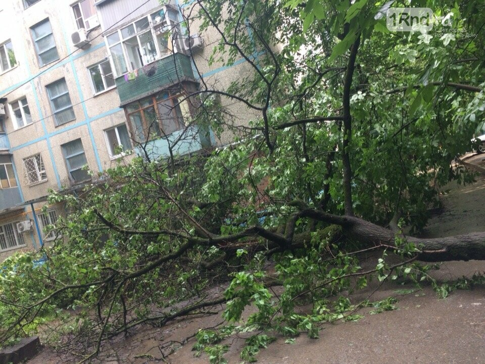 В Ростове из-за дождя начался деревопад, фото-1