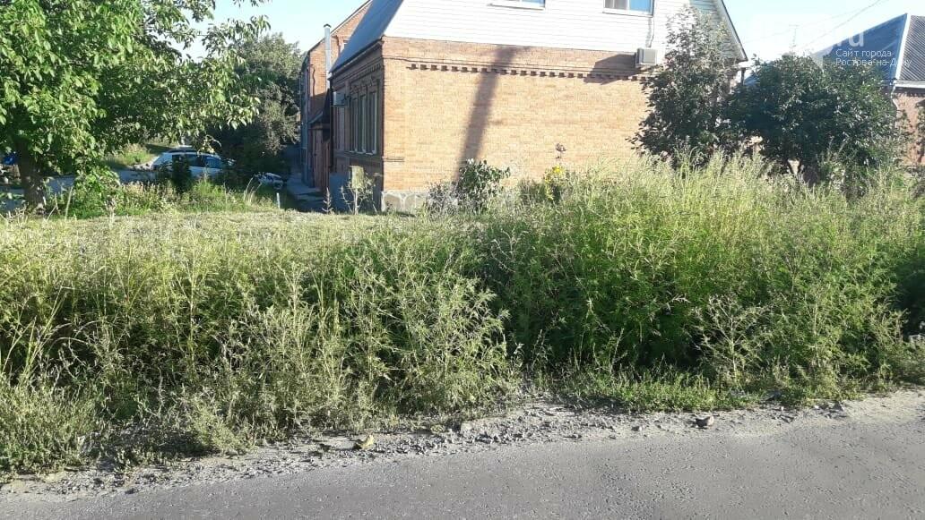 Власти Ростова заявили о невозможности косить амброзию на бесхозных пустырях и стройках, фото-5