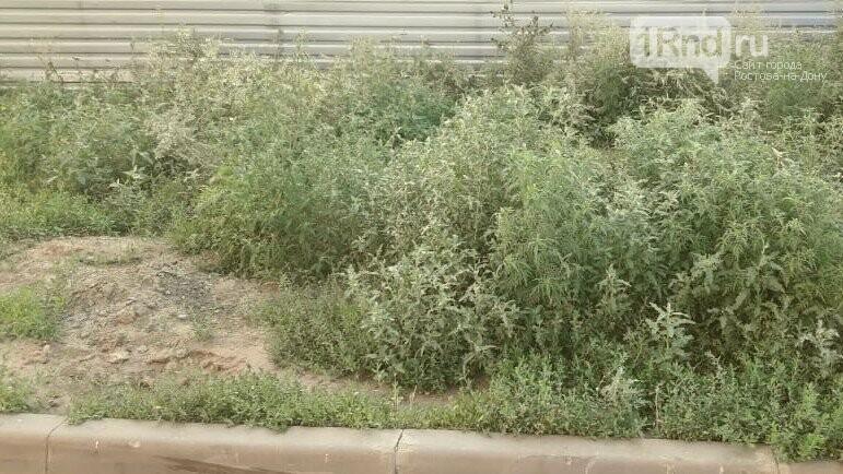 Власти Ростова заявили о невозможности косить амброзию на бесхозных пустырях и стройках, фото-3