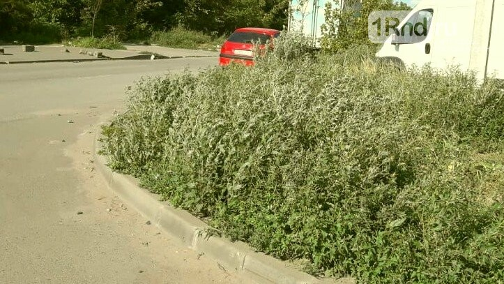 Власти Ростова заявили о невозможности косить амброзию на бесхозных пустырях и стройках, фото-2