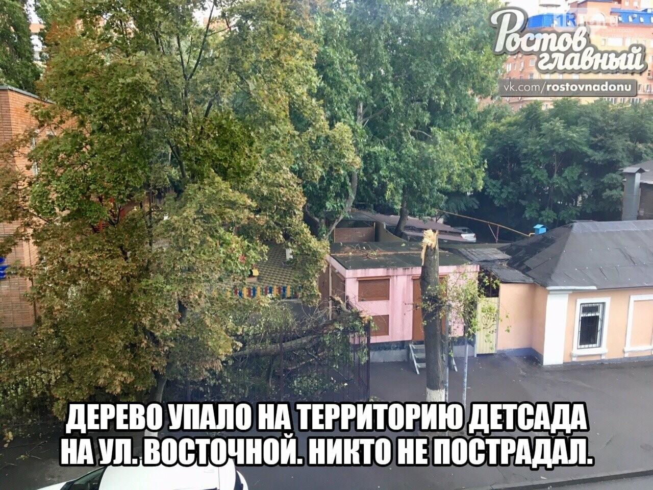 В Ростове ураганный ветер повалил десятки деревьев, фото-1