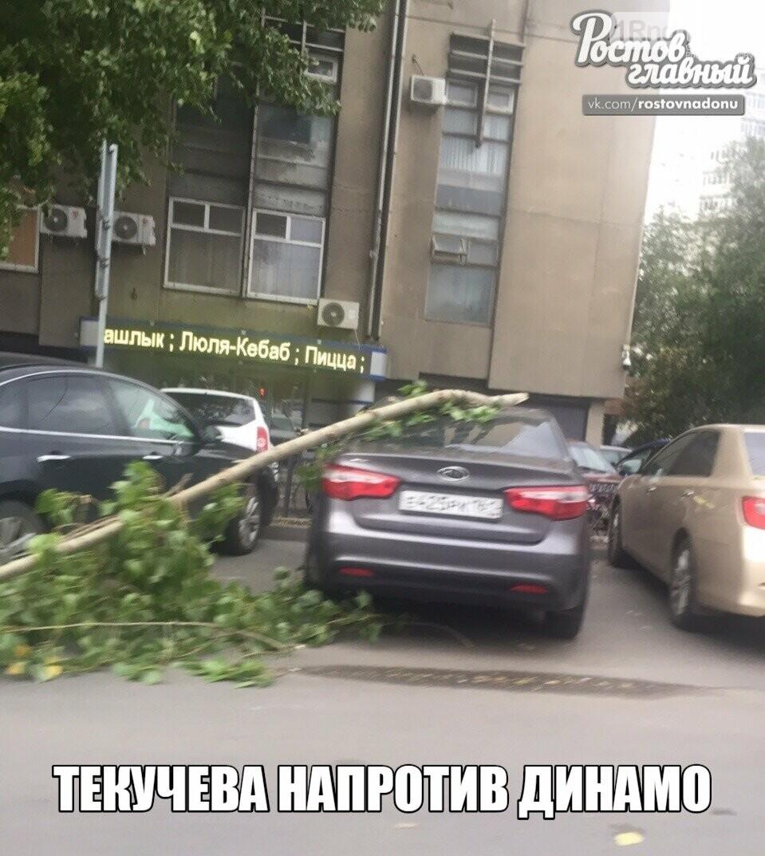 В Ростове ураганный ветер повалил десятки деревьев, фото-2