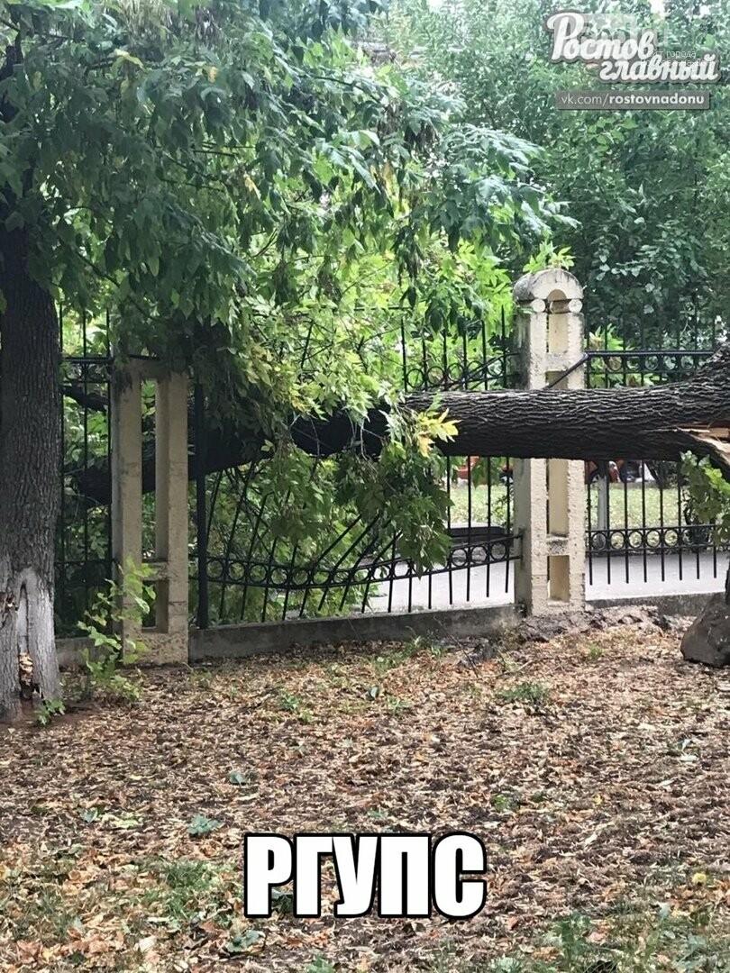 В Ростове ураганный ветер повалил десятки деревьев, фото-4