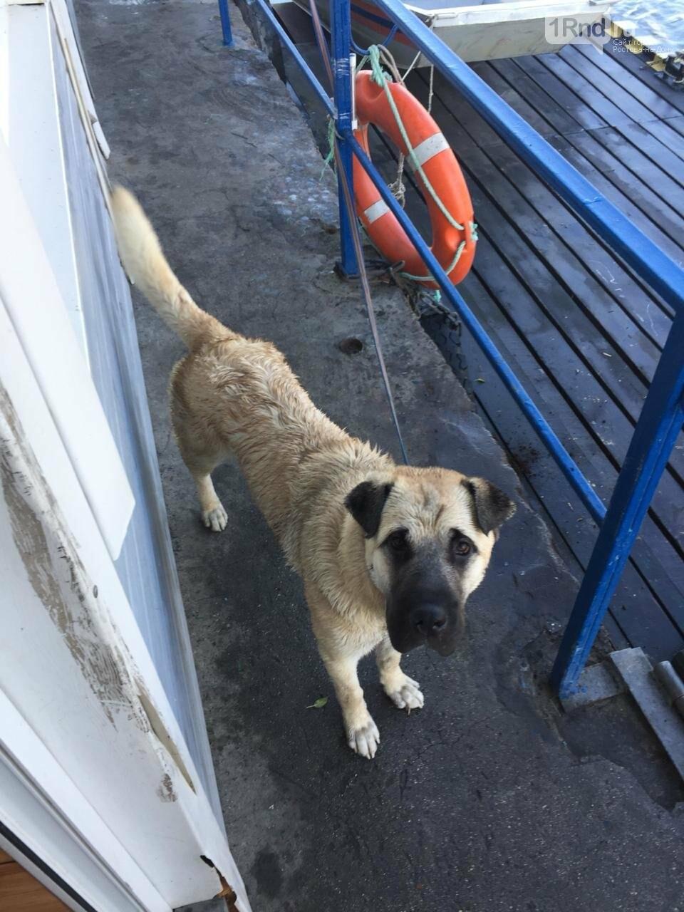 В Азове мужчина едва не утонул в Дону, спасая свою собаку, фото-1