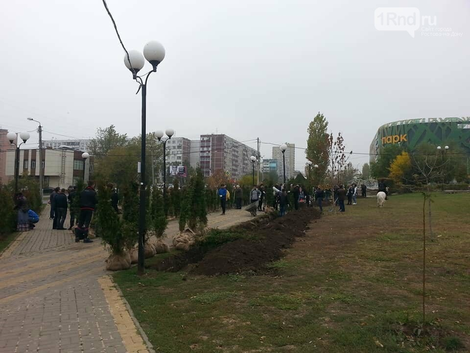 Те же грабли: в ростовском парке «Дружба» депутаты Заксобрания посадят туи , фото-2