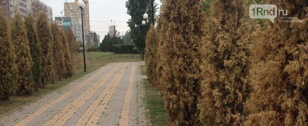 Те же грабли: в ростовском парке «Дружба» депутаты Заксобрания посадят туи , фото-1