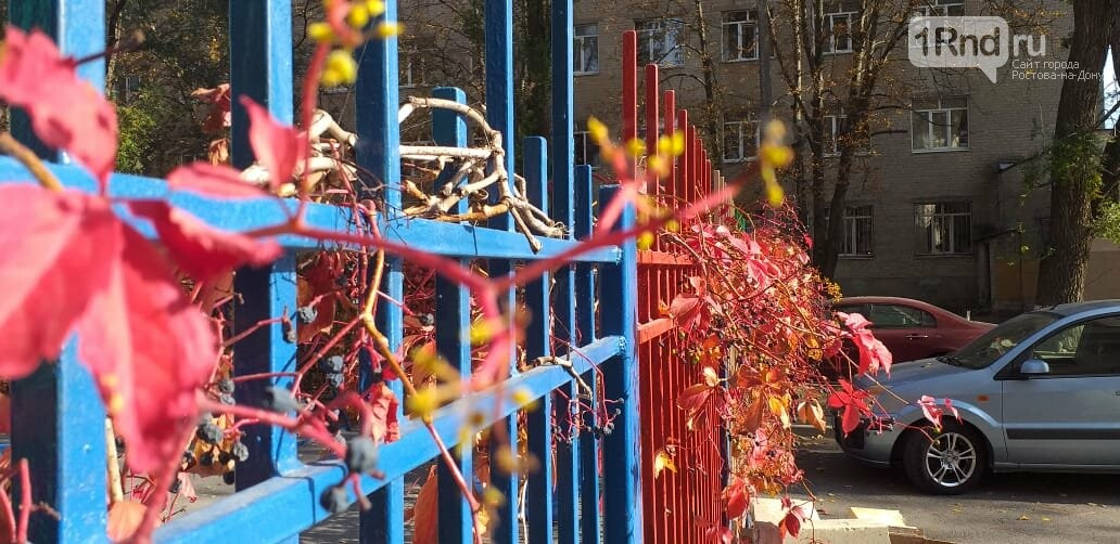 В Ростове виноград второй раз решил плодоносить, фото-1