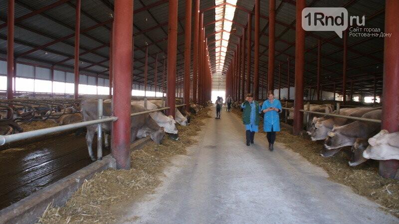 От коровы до прилавка: как в Ростовской области производят молоко, фото-14